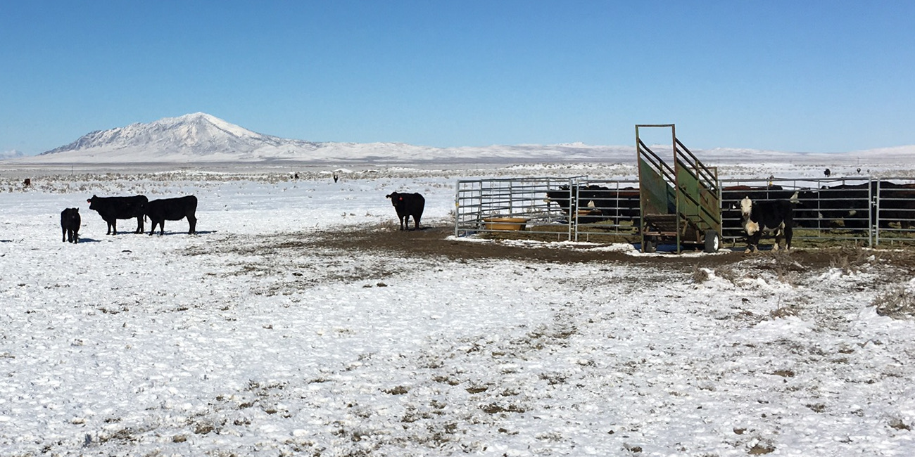 Portable Corral and Loading Chute