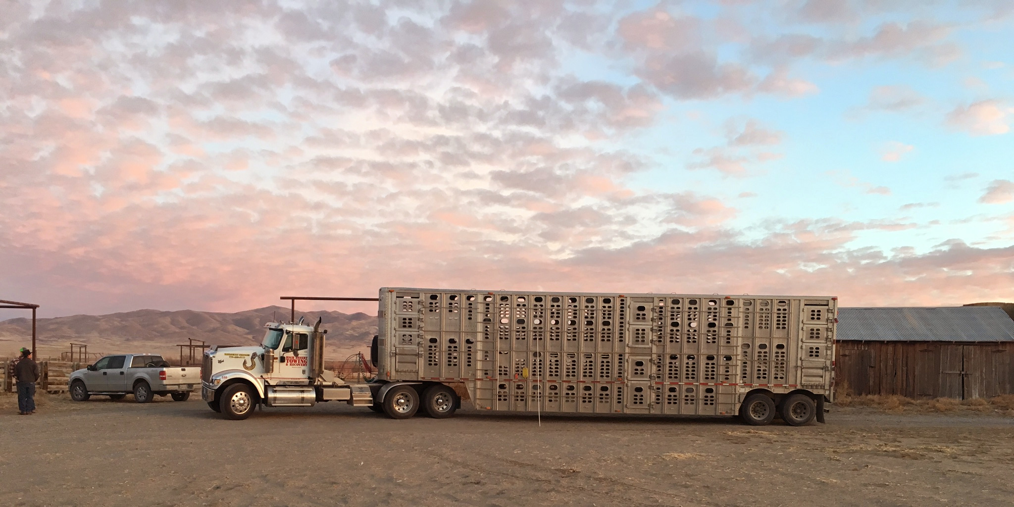 Cattle Trucks for Hire or Rent