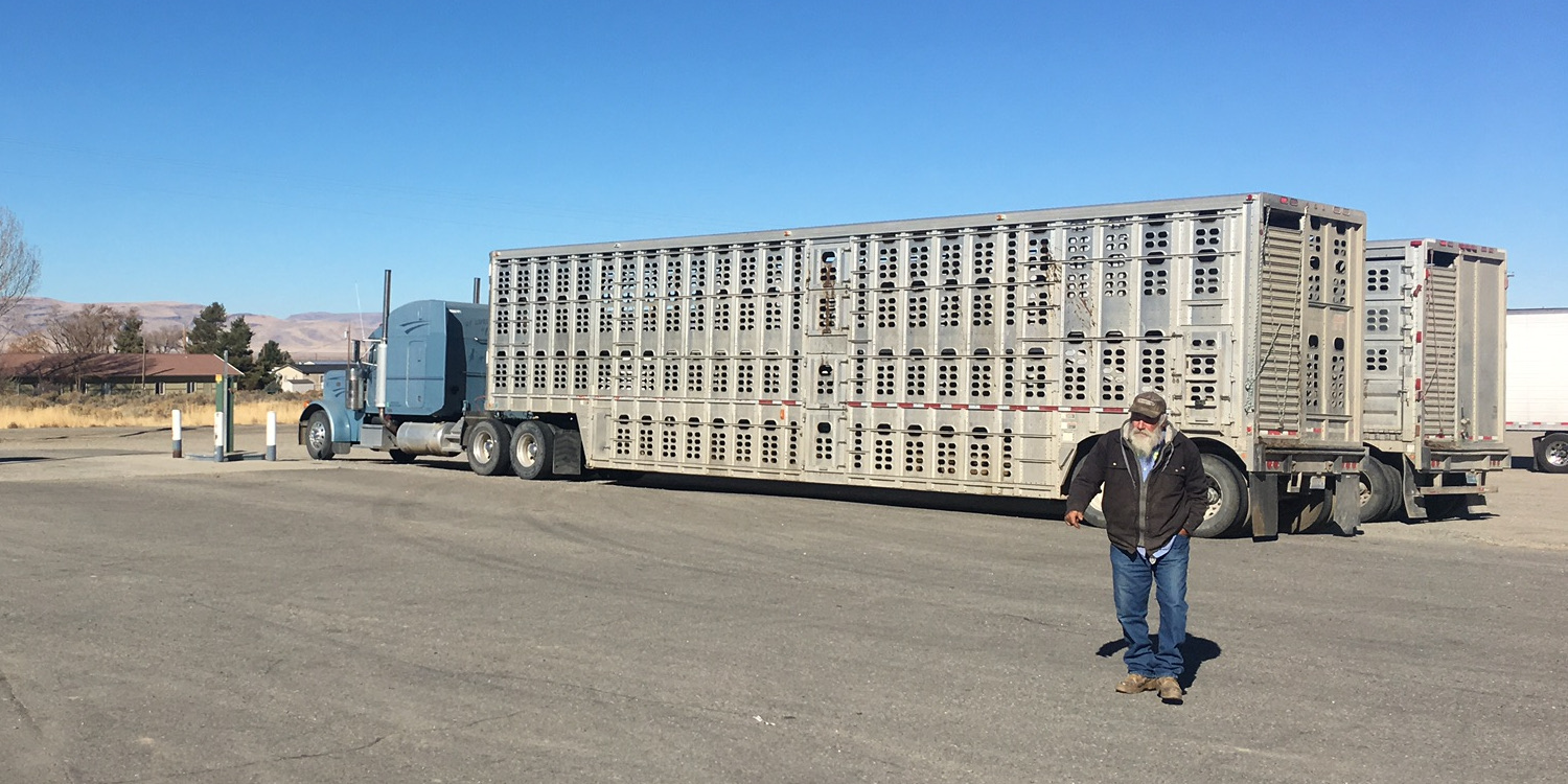 Cattle Trucks to Haul Your Stock