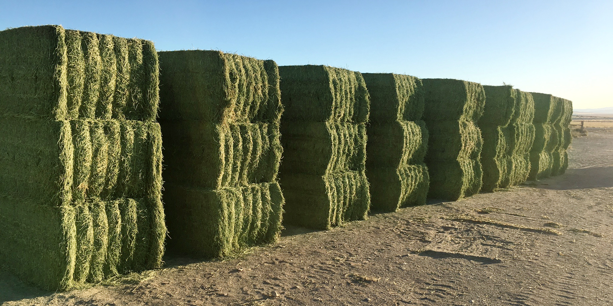 Nevada-grown Alfalfa Hay Sold and Delivered