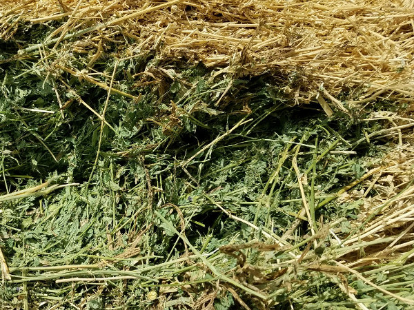 Fine Nevada-grown Hay for Sale